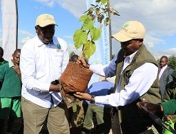 Campaign to plant 50 million trees launched